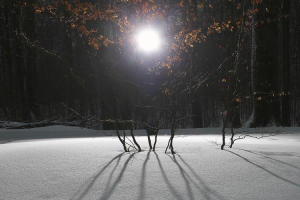 Beech tree forest (Fagus Fagaceae), night
