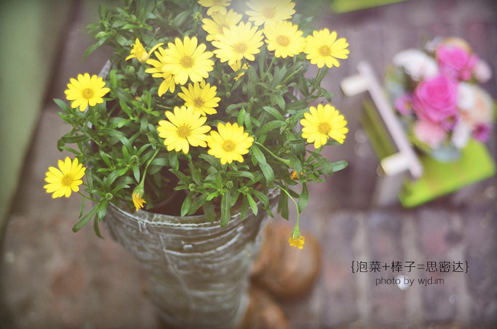 qingxin18